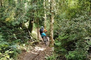 MTB-in-Forest-small