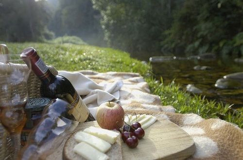 picnic in the woods at forest edge nature lovers retreat in knysna